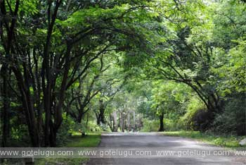 andhra ooty - horsely hills