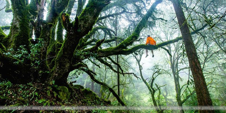 Your inner environment, your external environment