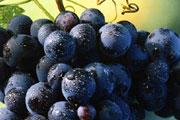 Good for grape